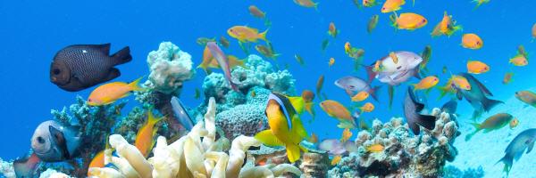 Lo snorkeling a fiji è meraviglioso